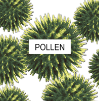 Pollen that can be stopped by an air filter from Williams Heating-Cooling, Inc..
